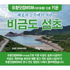 유황닷컴MSM 비금도섬(시금치)